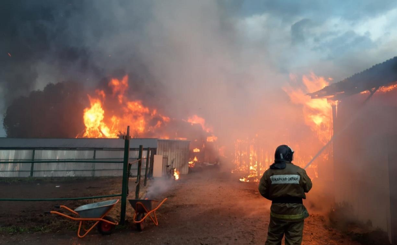 В Тульской области сгорела конюшня: погиб мужчина
