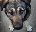 Приют для бездомных животных «Любимец» просит помощи