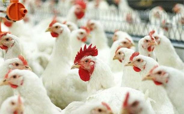 Россельхознадзор отправил свыше 370 тонн курятины обратно в США