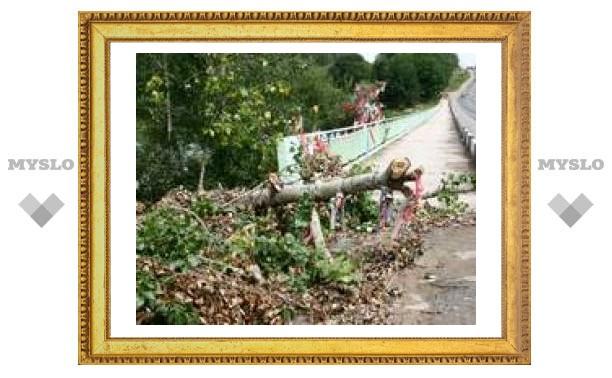 В Туле больше нет дерева влюбленных