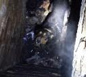В Новомосковске поисковики вытащили упавшую в подвал собаку: видео