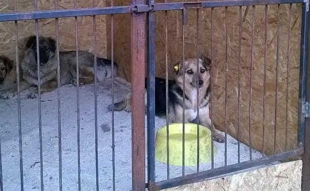 Приют для собак «Континент+» получил субсидию в 1 млн 600 тыс. руб.