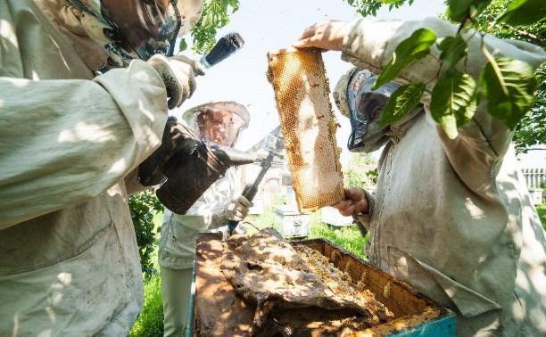 В Тульской области пасечники намерены подать в суд на аграриев из-за массовой гибели пчёл