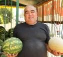 В Туле проверят точки торговли арбузами и дынями
