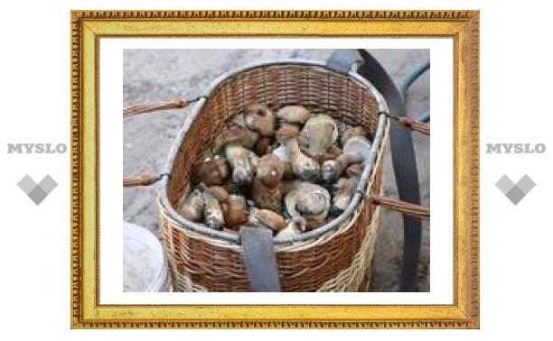 В Туле появились грибы