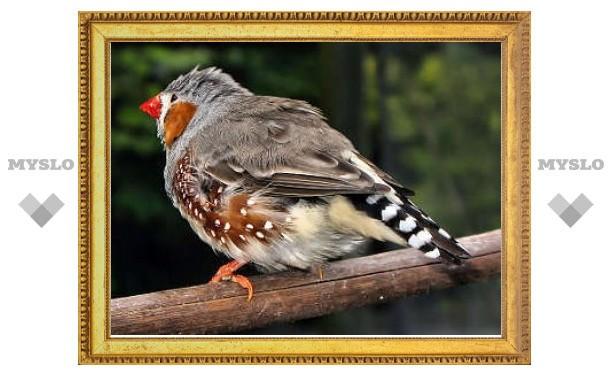 Дарвиновские вьюрки доказали важность обоняния для птиц