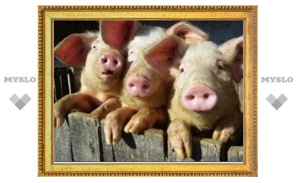 Из-за африканской чумы свиней у жителей Ленинского района отобрали домашних животных