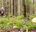 В лесу в Алексинском районе пропала женщина: нужны добровольцы для поиска