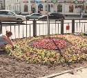 В Туле появятся «Ёжики» и «Ажурные зонтики»