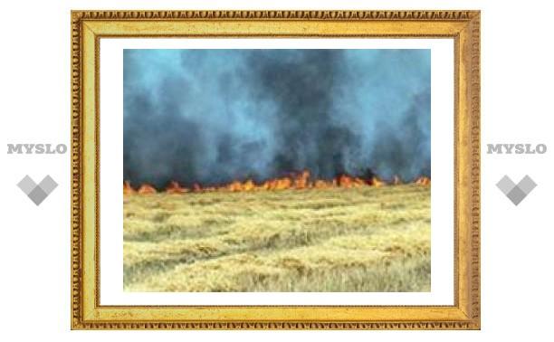 Под Тулой сгорели гектары зерна