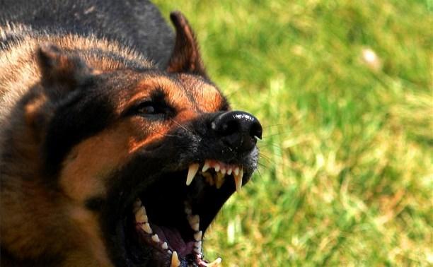 На начало 2015 года в Тульской области зафиксировано 65 случаев бешенства животных