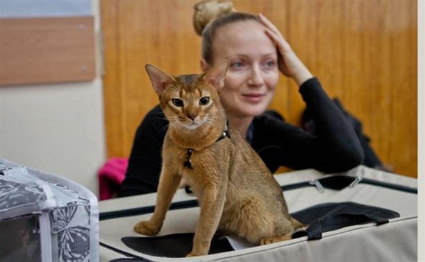В Туле прошла международная выставка кошек «Зимнее конфетти»