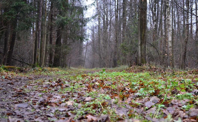 В Узловском районе в лесу обнаружили труп женщины