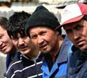 На тульских полях незаконно трудились нелегалы