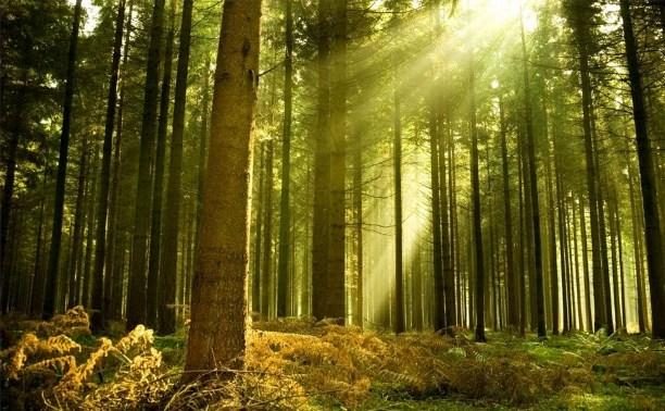 Госдума рассмотрит законопроект о создании «зелёных поясов» вокруг городов