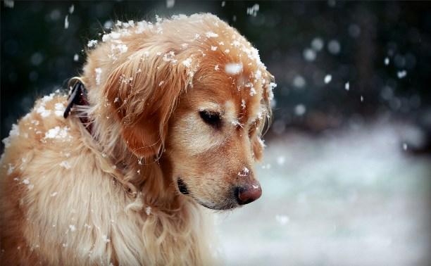 В Госдуме не поддержали введение налога на собак