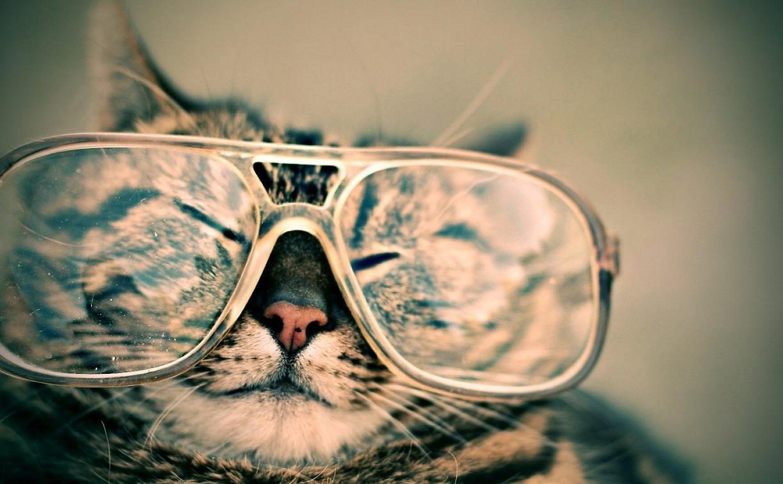 Ученые заявили, что кошки умнее собак