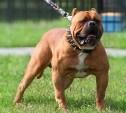 В России утвержден список потенциально опасных собак