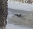 Из-за льющейся из люка воды в Туле дорога покрылась льдом