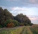 Лето на Куликовом поле: экскурсии, квесты и мастер-классы