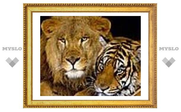 Тульские львы и тигр перебрались в Липецк