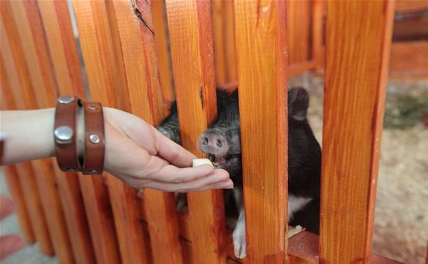 В Туле появился контактный зоопарк