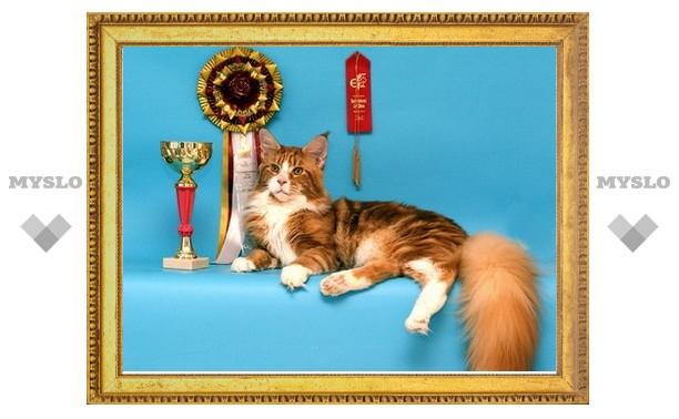 В Туле выбрали самую красивую кошку