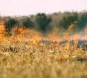 В Тульской области сохраняется высокий уровень пожароопасности
