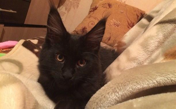 В Ясногорске спасли кота, который почти неделю находился под завалами взорвавшегося дома