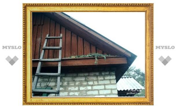 Под Тулой гражданин Таджикистана выращивал коноплю