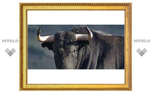В Туле фермер спас доярку от взбесившегося быка