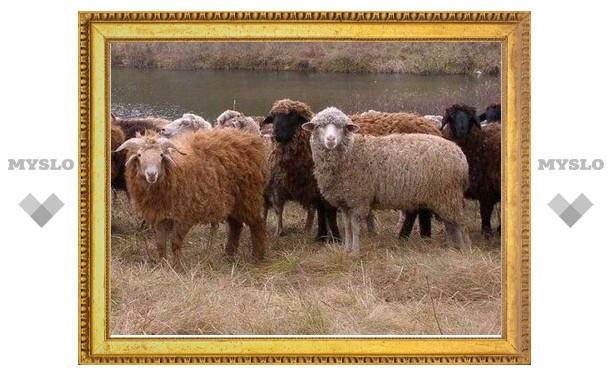Пастушка украла отару овец