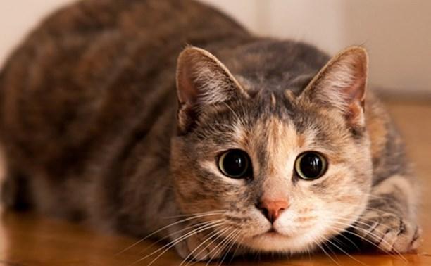 Депутаты Госдумы предлагают ввести платную регистрацию домашних животных
