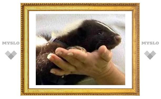 В Тульском экзотариуме поселились новые животные