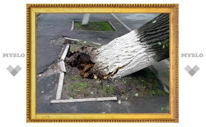 В Туле на маршрутку упало дерево