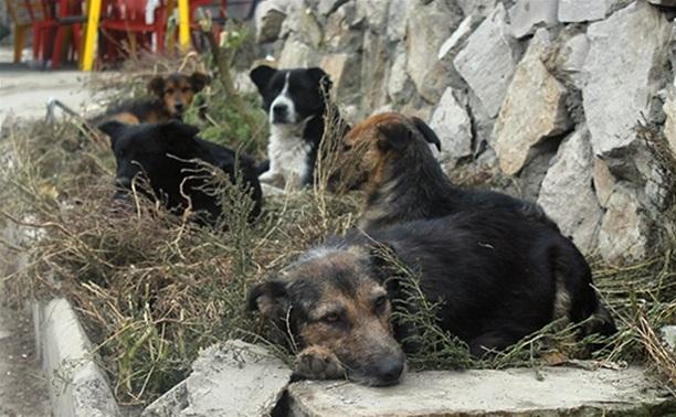 В Туле объявлен новый аукцион на отлов бродячих собак