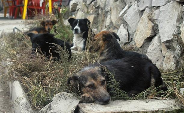 Когда в Туле решат проблему бездомных собак?