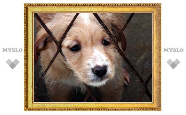 Тульские животные нуждаются в нашей помощи