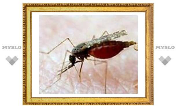 Финская полиция поймала вора с помощью крови, добытой из комара