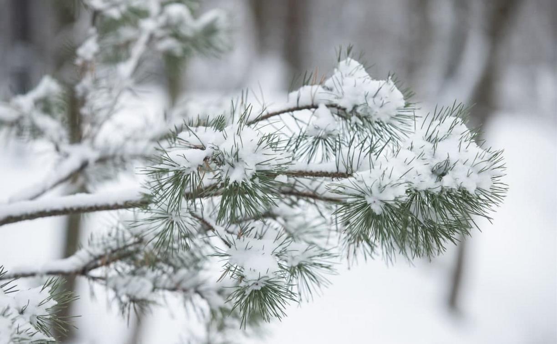 Погода в Туле 23 февраля: облачно и до минус 28 градусов
