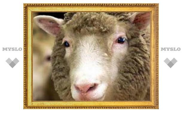 В Японии вырастили ''запасной'' орган в овце