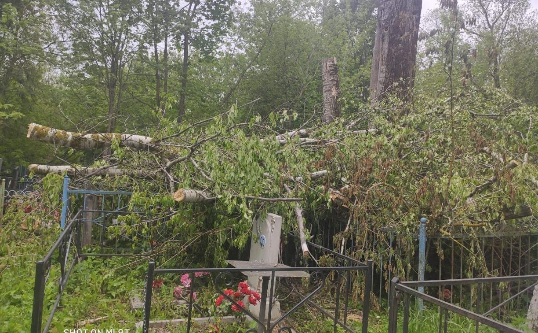 В Черни во время уборки на кладбище могилы завалили спиленными деревьями