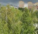 В Тульской области объявлен желтый уровень опасности из-за сильного ветра
