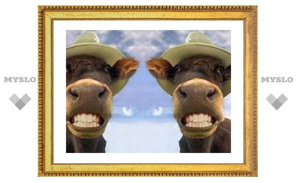Американские молочники отказались от молока клонированных коров