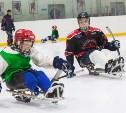 В Туле разыграют Кубок Толстого по следж-хоккею