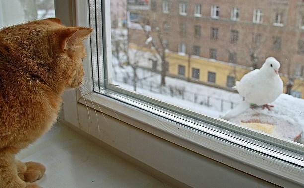 Погода в Туле 14 января: облачно, сухо, до пяти градусов мороза