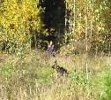 Полиция Кимовского района нашла потерявшуюся в лесу пенсионерку