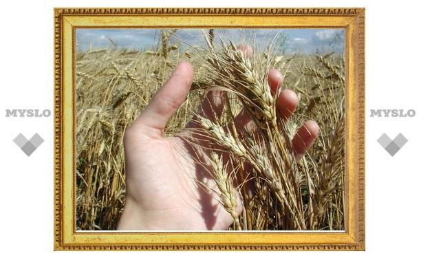 Тульским фермерам компенсируют последствия засухи