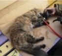 Тульское МЧС рассказало о спасении кошки