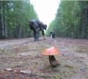 Маньяки с трассы «Дон» могут охотиться за грибниками